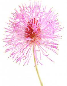 BotanicalGardenAuroville_0221r